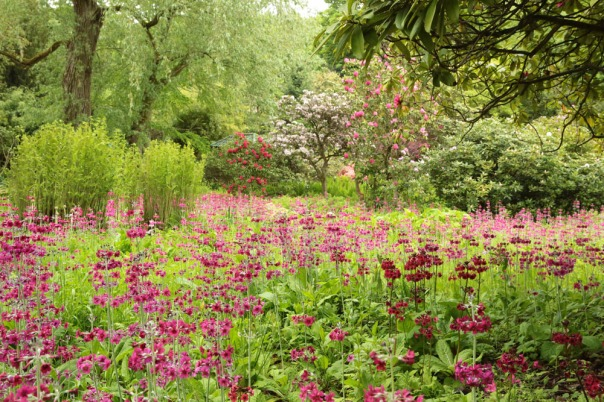 916A6731Himalayan Garden at Harewood 1000