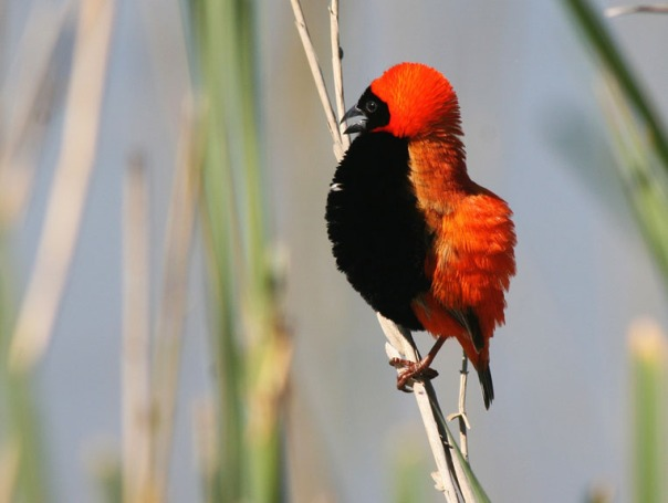 SA to Namibia bird 750